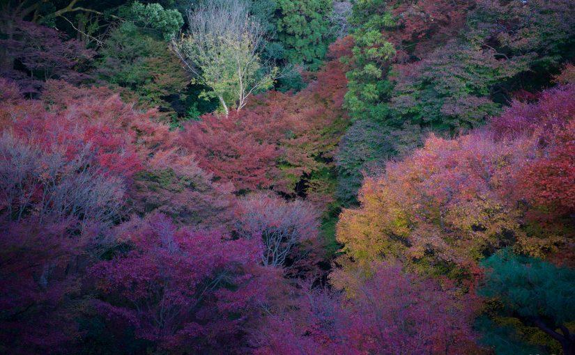 人夫放生之旅 – 京阪神自由行 Day 4